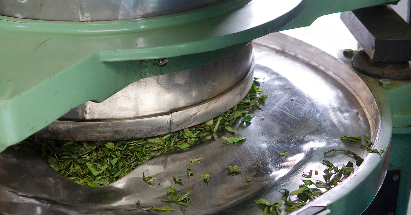 Tea leafs being mechanically rolled during black tea making process.