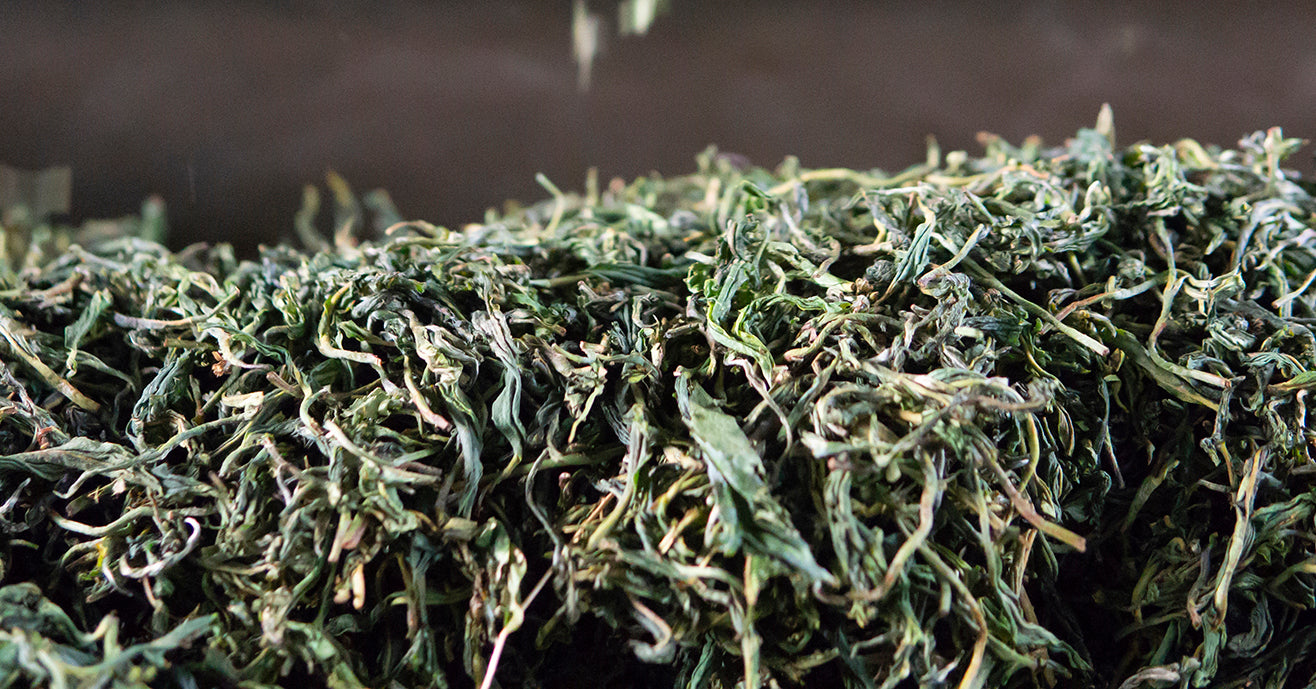 Loose tea leaves oxidizing during the process of being transformed into black tea.