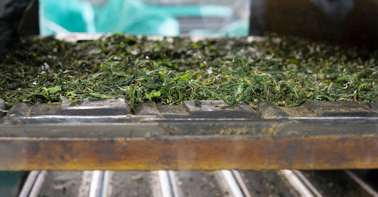 Organic black tea leaves drying in final stages of tea making process.