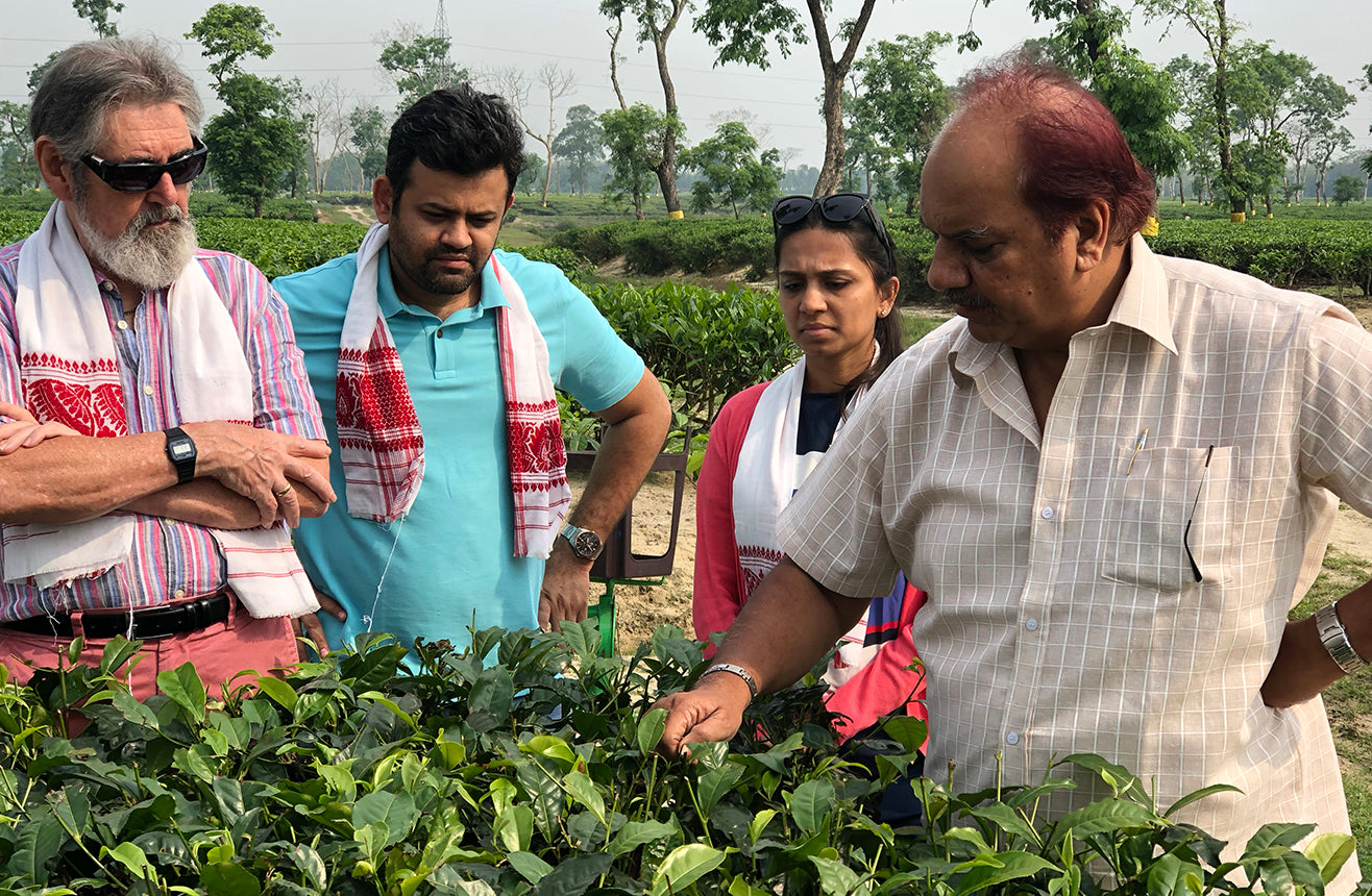 Tea Estate owners, educators and specialists examining tea plants in Assam India