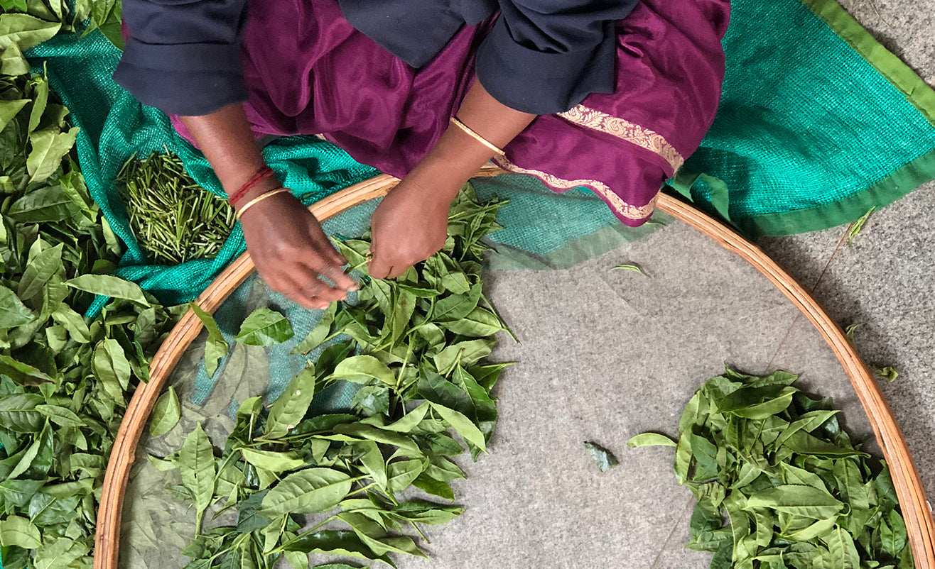 Nilgiri Woman in colorful clothes gently sorting whole leaf teas in a large round and shallow wicker tray