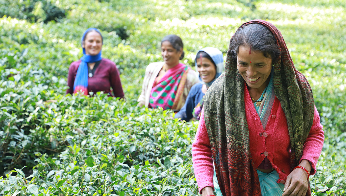 Tea pluckers in Kumaon, India