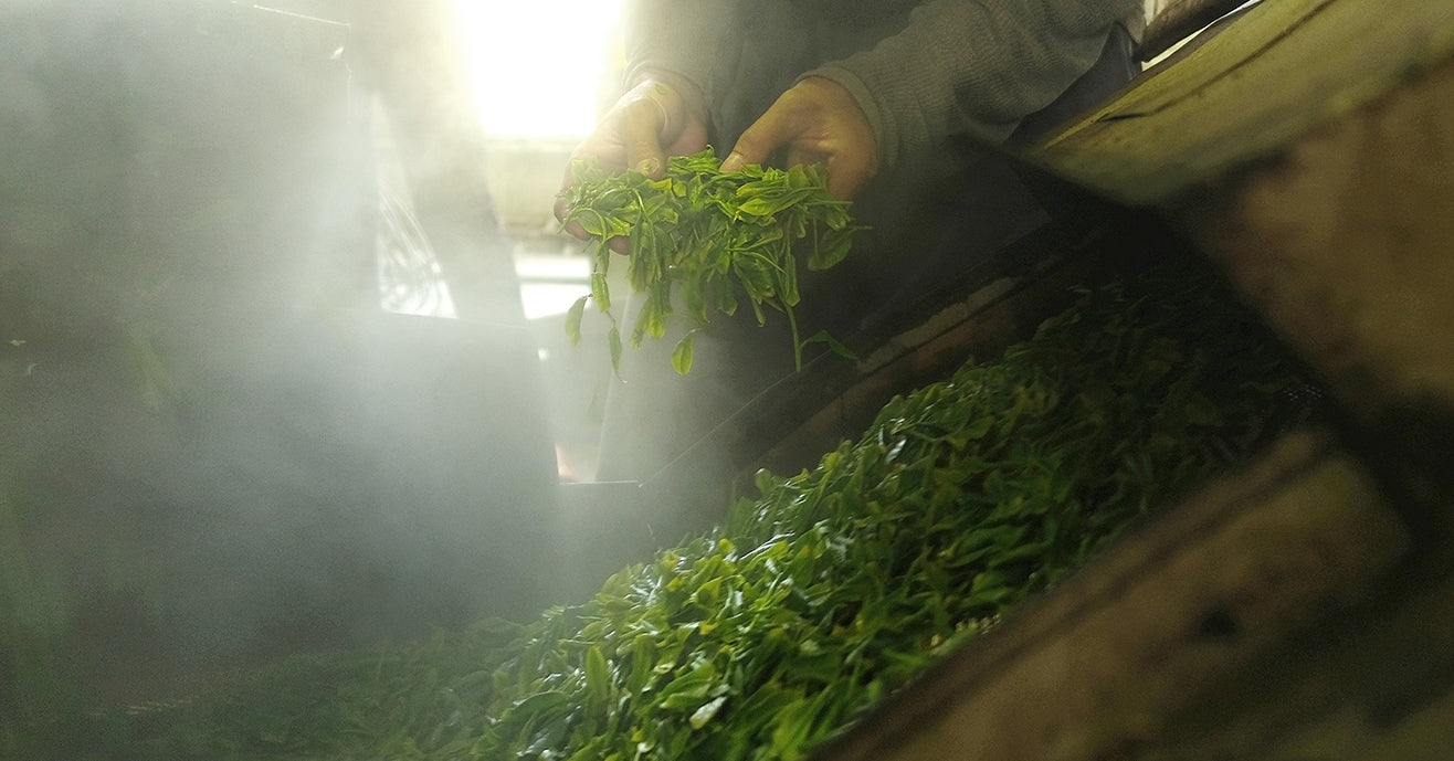 Steaming Tea in a Japanese Tea Factory