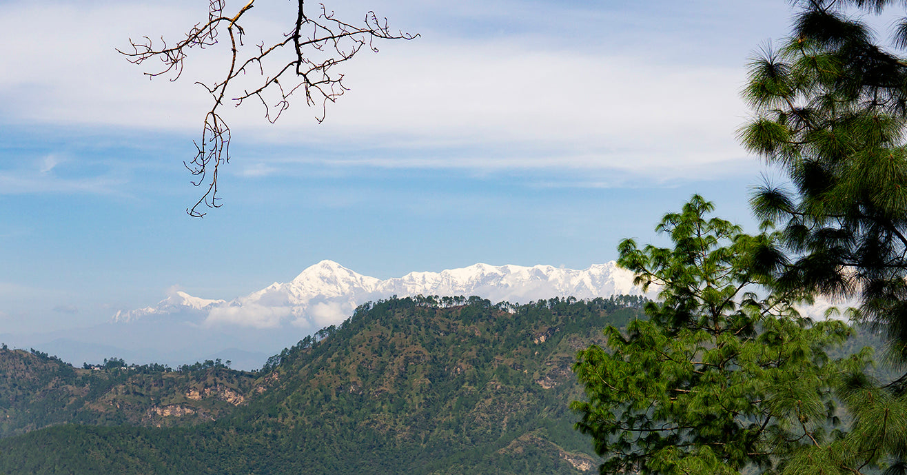 view of the Himalayas from a distance, over green hills