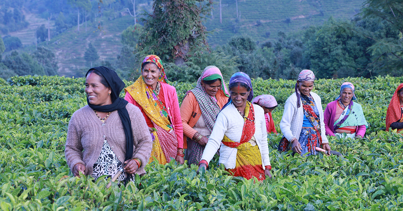 Women tea pluckers in colorful clothes standing in among tea bushes and smiling