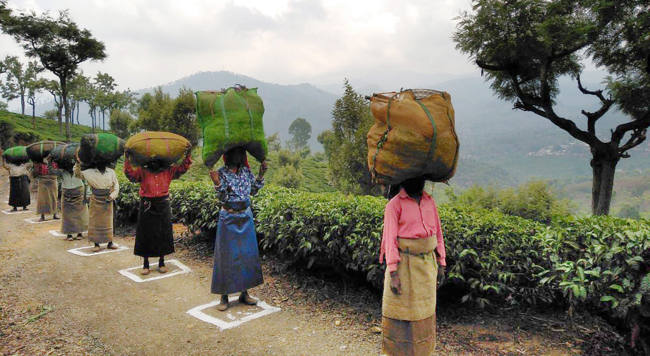 Tea workers practicing social distancing