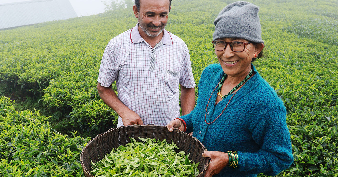 Shiva Kumari Shresta and Raj Kumar Shresta, tea farmers in Nepal, holding a basket full of freshly picked tea leaves and smiling