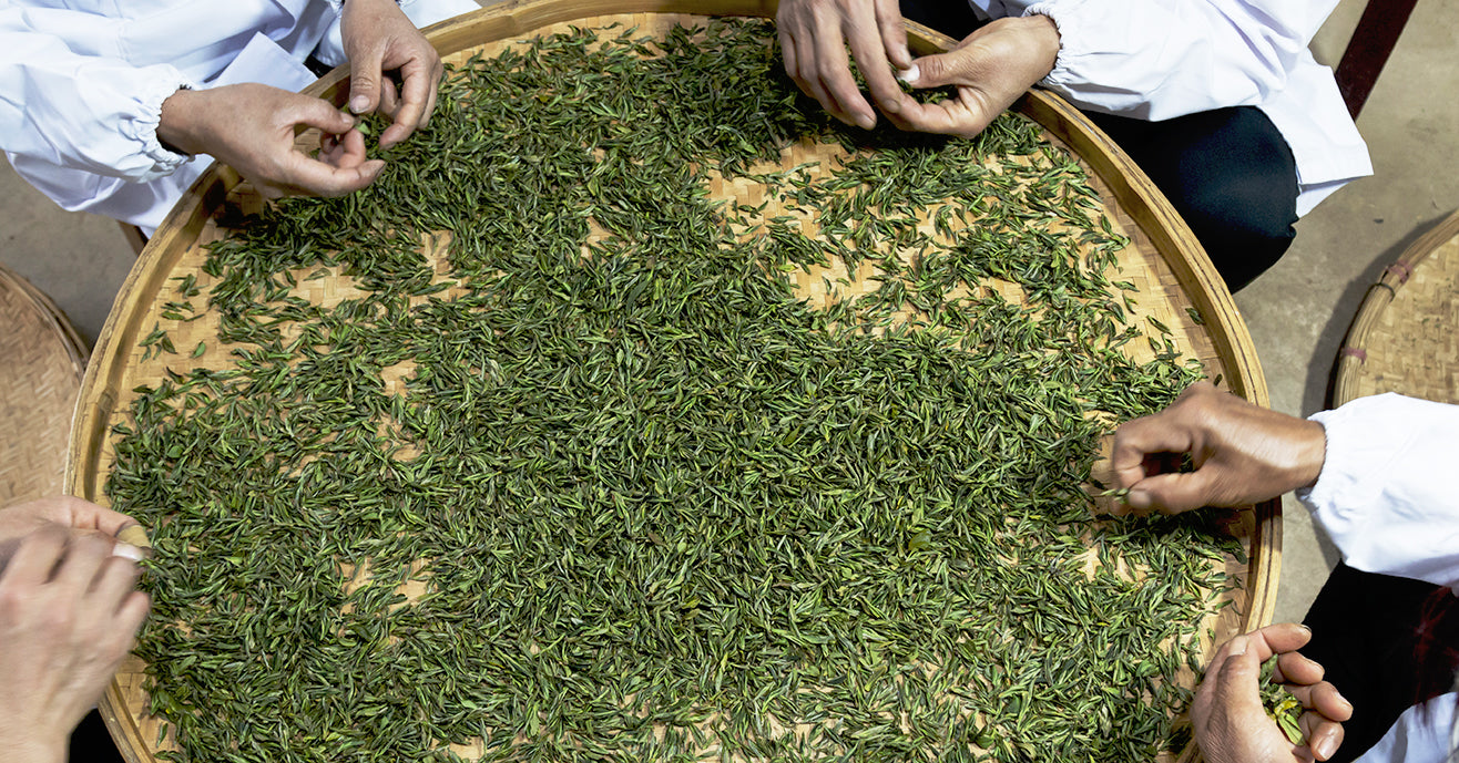 Sorting tea leaves for size and shape consistency
