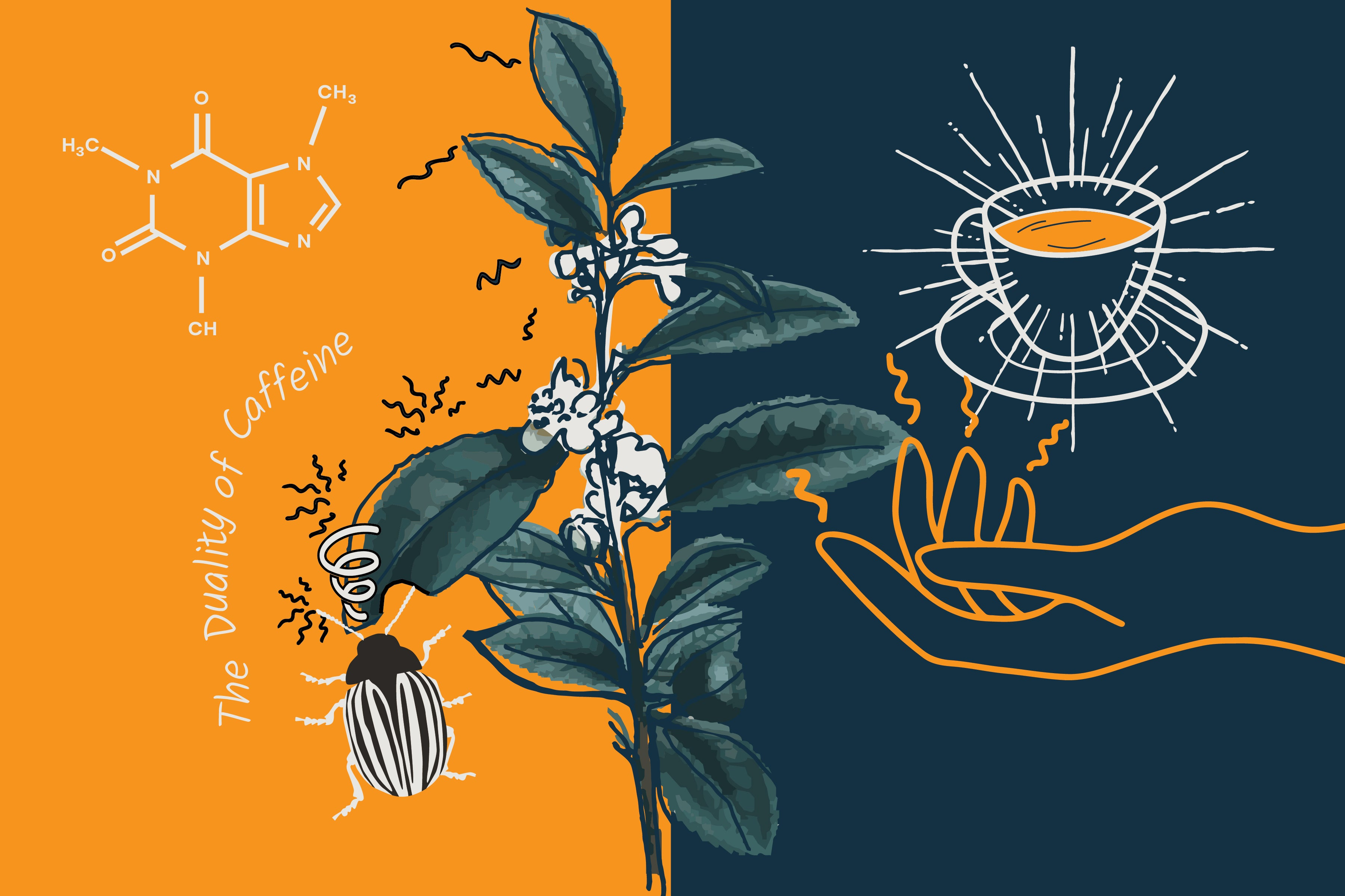Illustration showing Camellia Sinensis plant and the effect of caffeine on bugs and humans