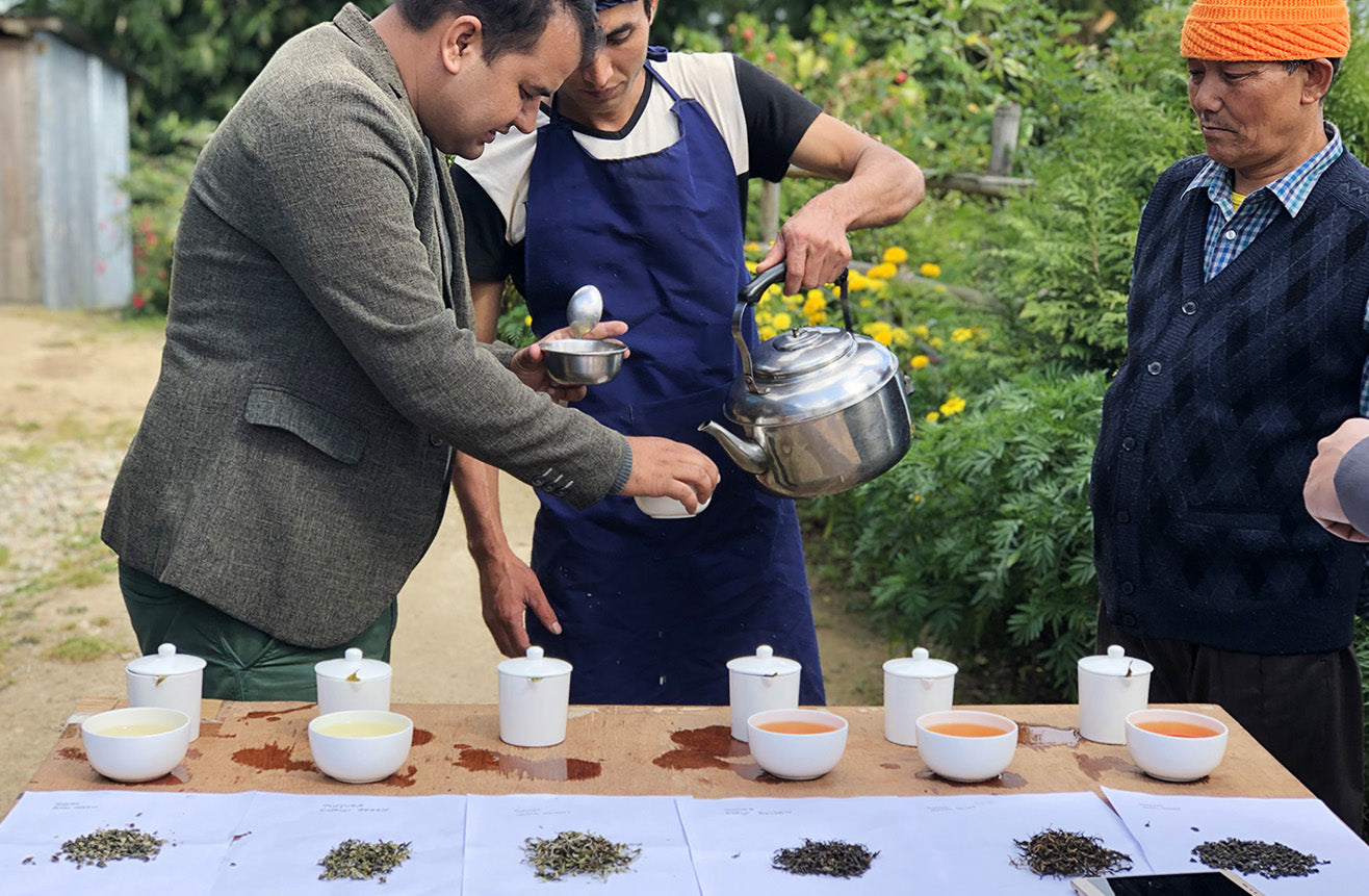 Cupping Tea, Tinjure Cooperative, Nepal