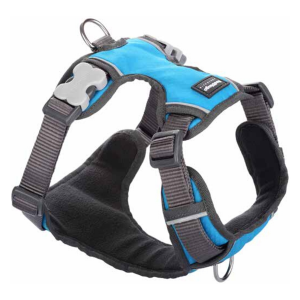 Red Dingo Dog Padded Harness (Turquoise)