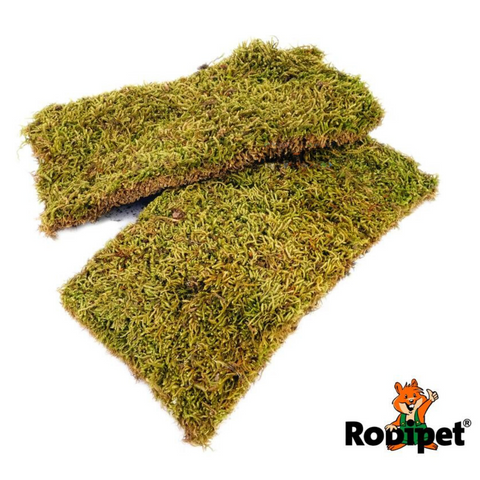 Rodipet Plates of Moss - 2 Plates