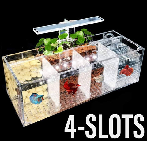 Acrylic Betta Tank Set with Pump and IOS (4 Slots)