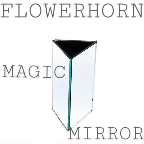 Flowerhorn Magic Mirror