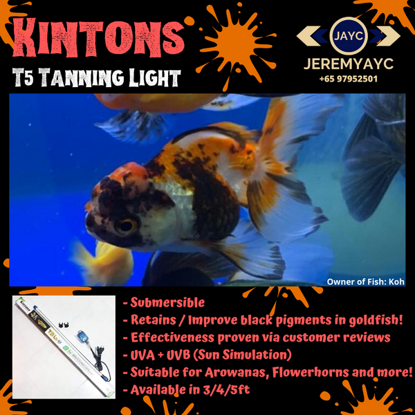 Kintons T5 Submersible Tanning Light