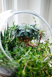Earth Day Terrarium Design Workshop