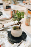 12/1 Tropical Bonsai Plant Styling Workshop