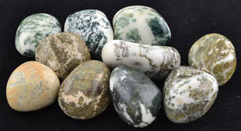 1 lb Tree Agate tumbled stones
