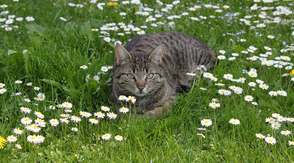 5 Top Tips for Pets with Spring Allergies