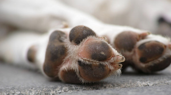 How to help your dog's itchy paws