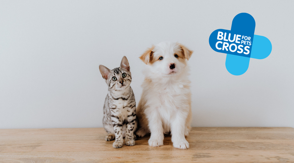 Blue Cross' 8 top tips for getting a new pet