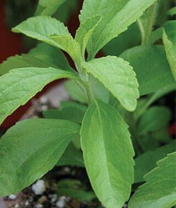 Stevia Leaf - Natural Whole Leaf Sweetner