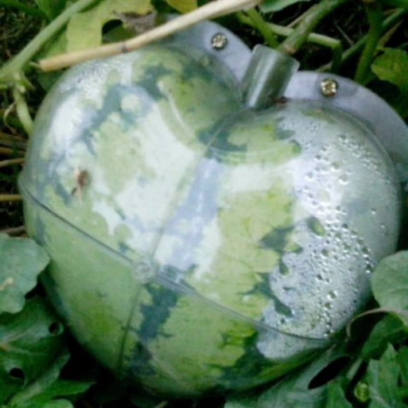 WHISM Big Size Plastic Clear Heart Square Watermelon Growing Mold Transparent Fruit Growth Forming Shaping Mould Garden Supplier