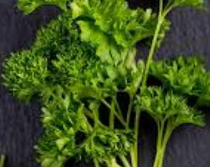 Fresh Parsley - bunch