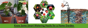 Know Some Smart Watering Hacks for a Home Garden
