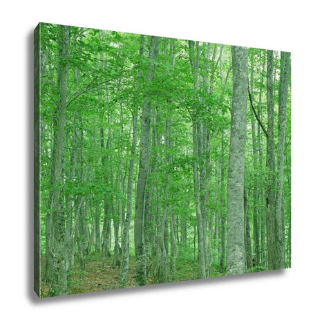 Gallery Wrapped Canvas, Green Forest Nature Landscape - Gardennaire