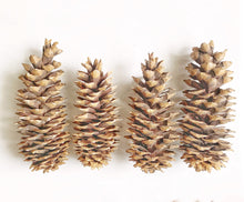 Load image into Gallery viewer, Giant Sugar Pine Cone
