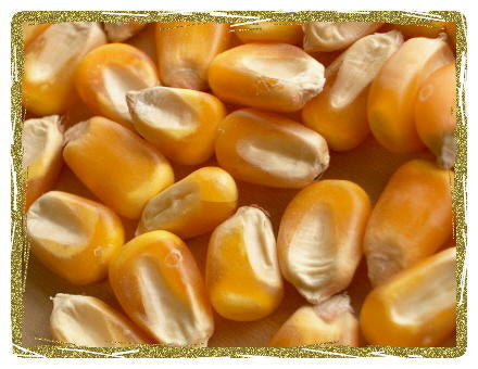 Organic Whole Yellow Corn