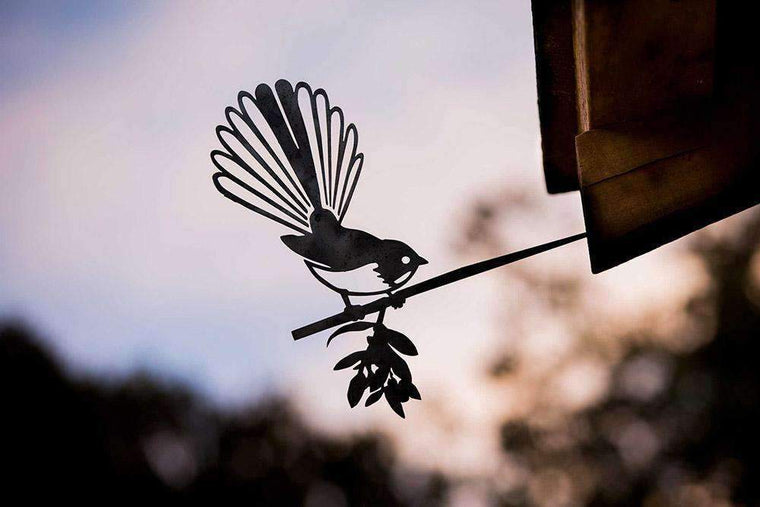 Fantail (The New Zealand Piwakawaka)
