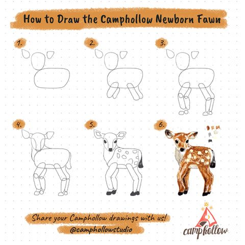 How to Draw the Camphollow Newborn Fawn