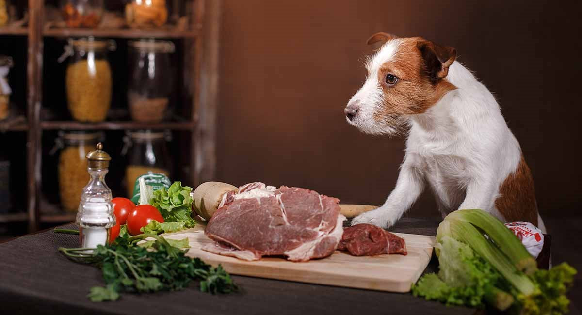 Dogs dietary and therapeutic feeding