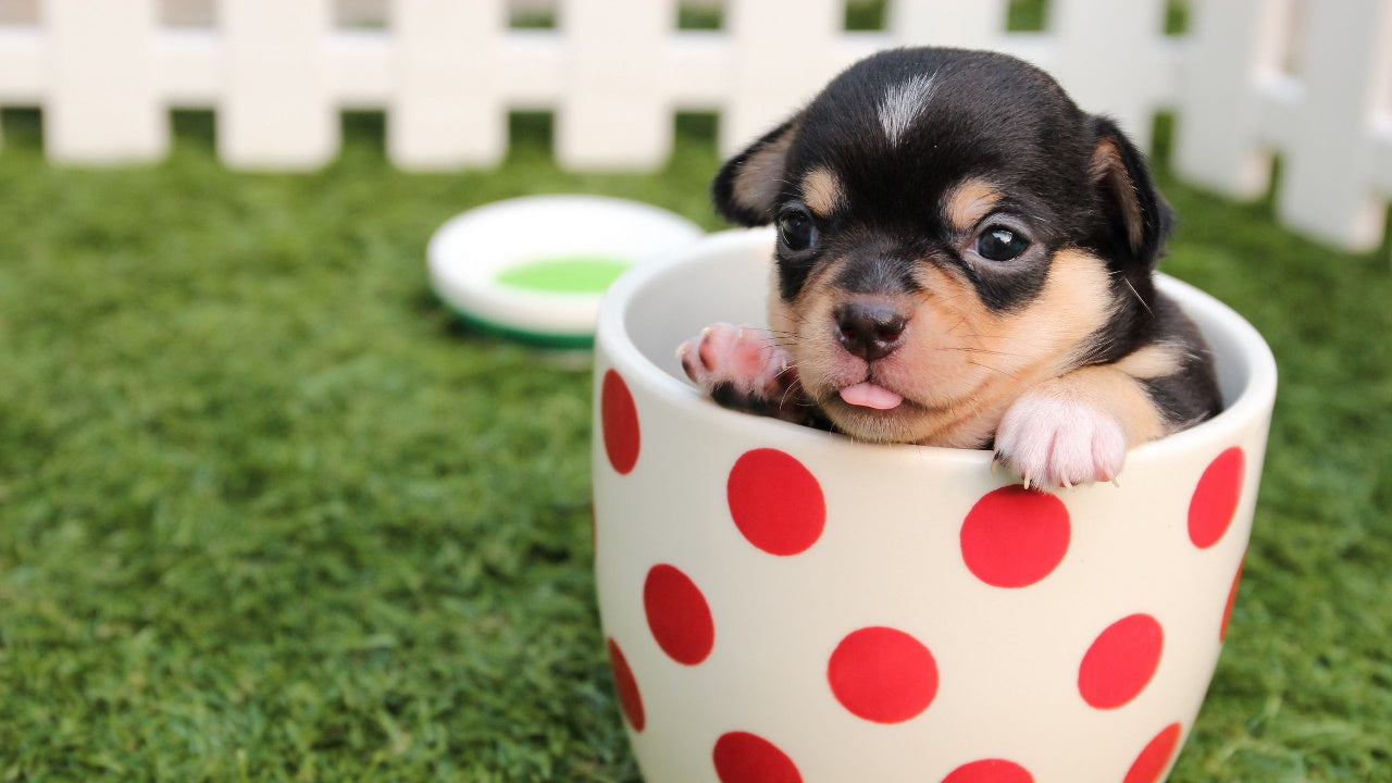 Feeding puppies from 1 month: what to feed and when to feed