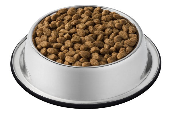 The Best Food for Your Cat