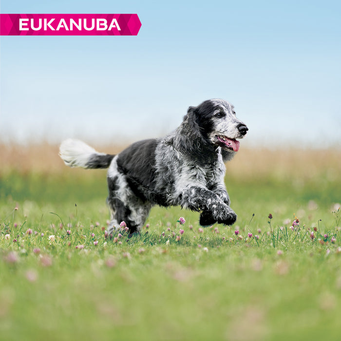 Eukanuba Caring Senior Medium Breed Chicken Dog Food 12kg