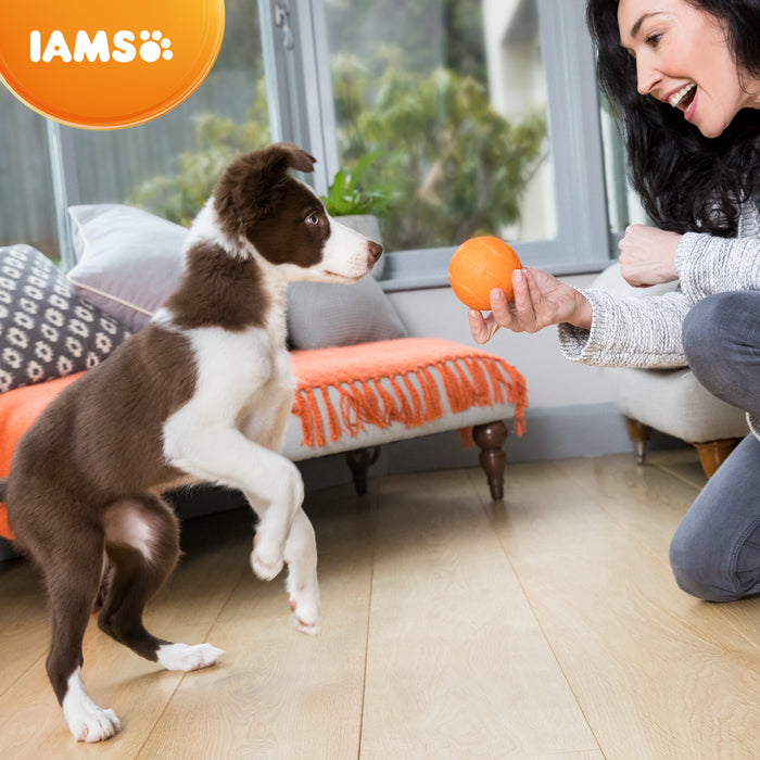 Iams for Vitality Small/Medium Breed Puppy With Fresh Chicken Dry Dog Food - 2kg