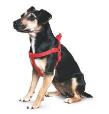 Ancol Nylon Padded Exercise Harness