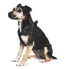 Nylon Padded Reflective Harness 1