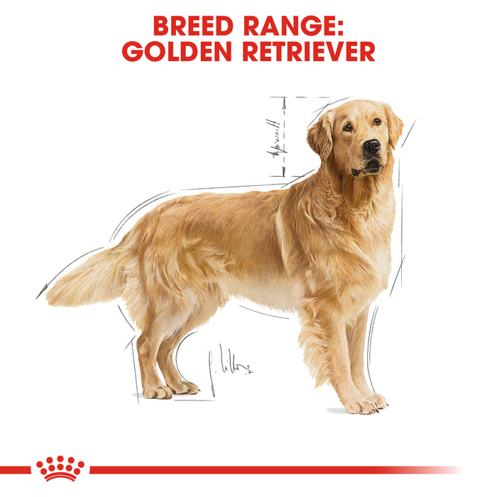 Royal Canin Adult Golden Retriever Dry Dog Food - 3kg