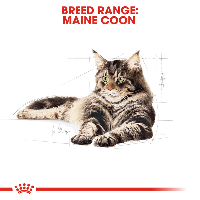 Royal Canin Maine Coon Dry Adult Cat Food - 4kg