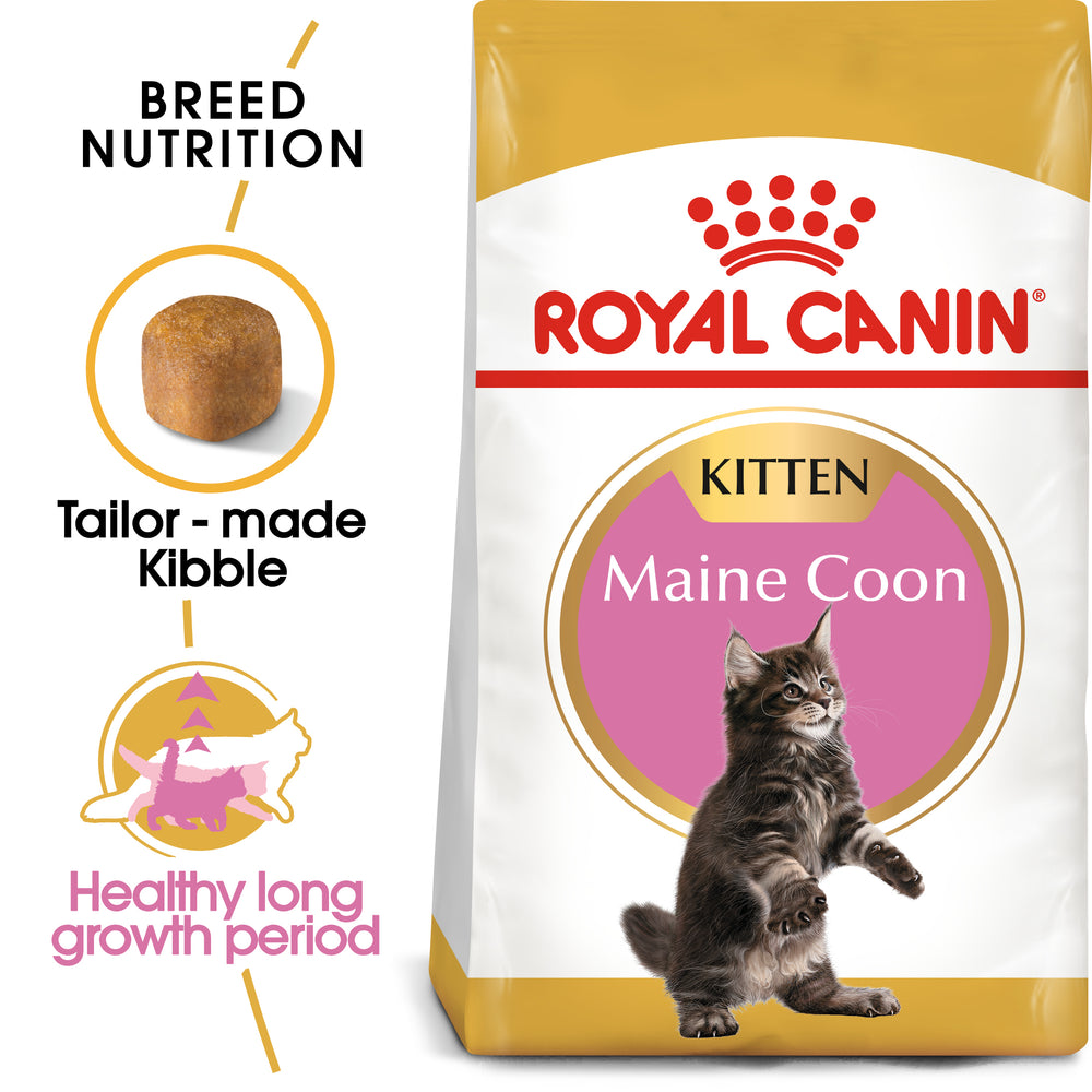 Royal Canin Kitten Maine Coon Dry Cat Food - 10kg