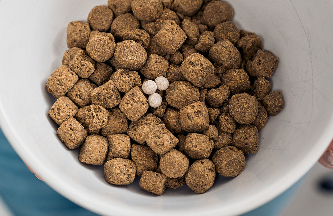 Probiotics for Dogs in Bowl