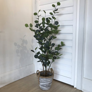 4FT EUCALYPTUS TREE