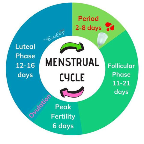 A circle with 4 sections explaining the 4 phases of a menstrual cycle