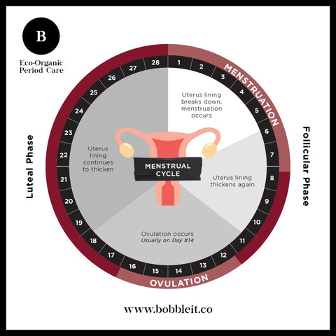 Bobble Period Products - A Woman's Menstruation Cycle in a graph
