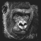 Close-up Gorilla on Black - Women's Fitted T-Shirt