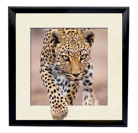 Amazing Lifelike 5d Framed Wall Picture Of Leopard 40 x 40 cm